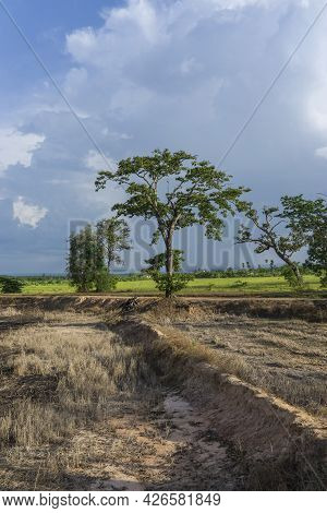 Newly Ploughed Rice Fields Showing Dry Lifeless Soil Before Start Of Rainy Season