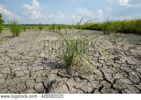 Cracked And Dry Soil After Lack Of Rain Alowing Race Plants To Die Due To Deforestation And Climate
