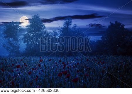 Poppy Flowers Among The Wheat Field At Night. Beautiful Rural Scenery In Fog. Trees Blurred In The D