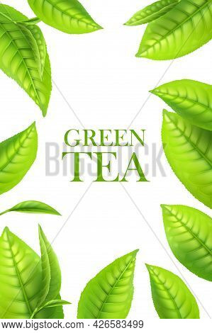 Green Tea Leaves, Organic Herbal Background. Vector Frame For Beverage Advertising With 3d Green Lea