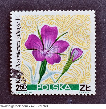 Poland -circa 1967 : Cancelled Postage Stamp Printed By Poland, That Shows Common Corn-cockle, Agros