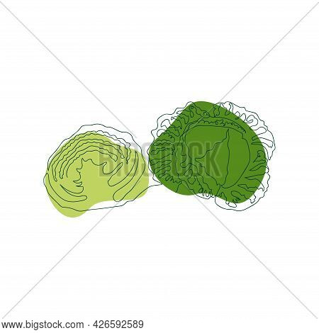 Savoy Cabbage Whole And Cut In Half, Hand Drawn In One Solid Line Against A Background Of Green Abst