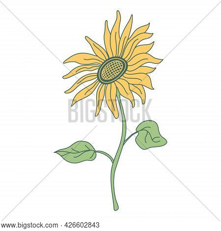 Sunflower On A Long Stem With Leaves.  Hand Drawn  Vector Illustration With Color Outline Isolated O