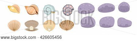 Set Of Seashells. Shell. Underwater World. Aquarium Or Pond. Summer Water. Isolated On White Backgro