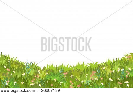 Meadow With Wildflowers. Grass Close-up. Beautiful Green Rural Landscape. Isolated. Cartoon Style. F