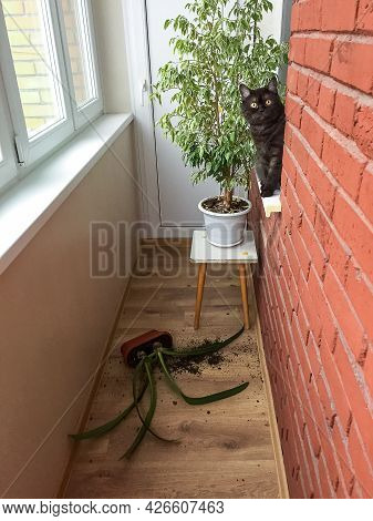 Funny Cat Dropped Dropped  Flower Pot With Green Plant From The Windowsill