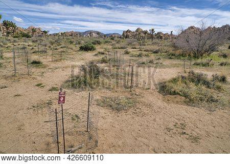 Closed Restoration Area At Joshua Tree National Park In California Desert