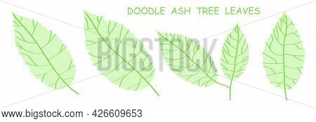 Doodle Ash Tree Leaves Isolated On White Background. Autumn Fallen Leaves Of Ash Tree. Vector