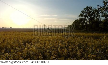 Aerial Drone View Flight. Flying Over The Rapeseed Field During Rapeseed Flowers