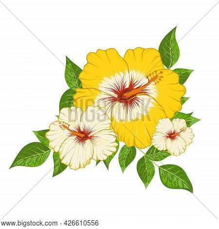 Сomposition Of Hibiscus Flowers And Leaves Vector Illustration