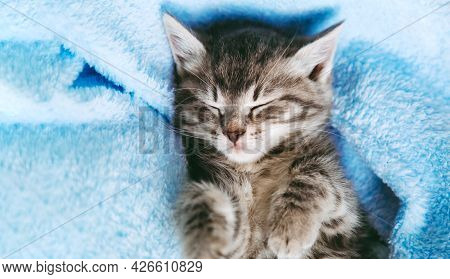 Striped Kitten Sleep On Blue Color Blanket. Gray Cat Kid Animal With Paws Relax On Bed With Copy Spa