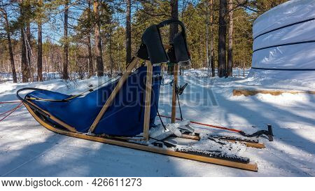 A Sled For Dog Sledding Stands On A Snow-covered Road In A Coniferous Forest. Wooden Runners And Fra