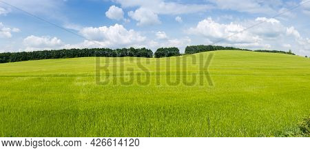 Slightly Hilly Field With Ripening Green Barley On A Background Of The Forest Belt And Sky With Clou