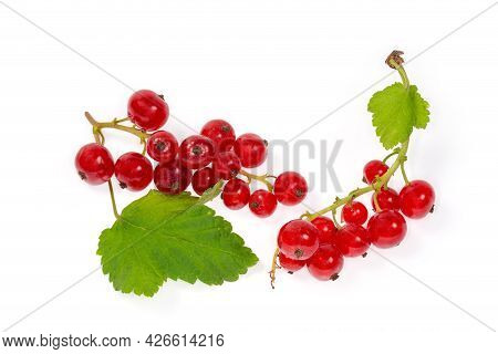 Two Clusters Of The Freshly Harvested Ripe Redcurrant With Small Leaves On A White Background, Close