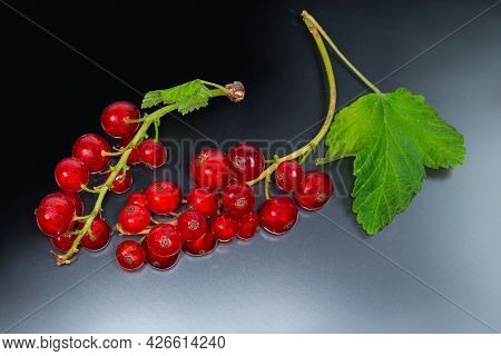 Two Clusters Of The Freshly Harvested Ripe Redcurrant With Small Leaves On A Dark Reflective Surface
