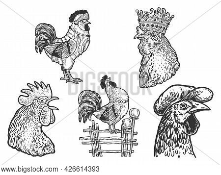 Rooster Cock Set Line Art Sketch Engraving Vector Illustration. T-shirt Apparel Print Design. Scratc