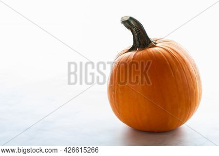 Whole Pumpkin Against A Bright White Background.