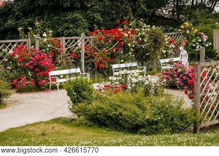 Velke Brezno, Czech Republic, 26 June 2021: Chateau Velke Brezno, Small Rose Garden In Castle Park W