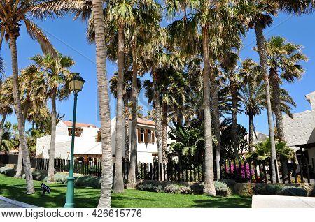 A Beautiful Palm Tree Garden And White Bungalows In Castillo Caleta De Fuste, Fuerteventura, Canary