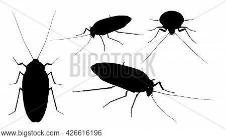 Set With Silhouettes Of A Cockroach In Different Positions Isolated On A White Background. Vector Il
