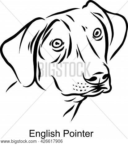 English Pointer Portrait Dog In Line Style - Pet Portrait In Light Style Head Isolated On White