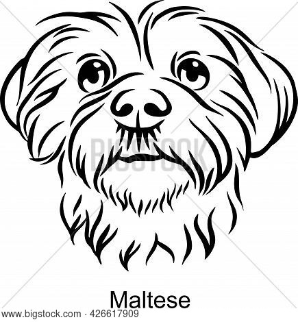 Maltese Portrait Dog In Line Style - Pet Portrait In Light Style Head Isolated On White