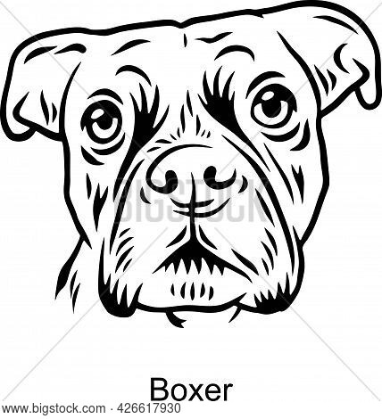Boxer Portrait Dog In Line Style - Pet Portrait In Light Style Head Isolated On White