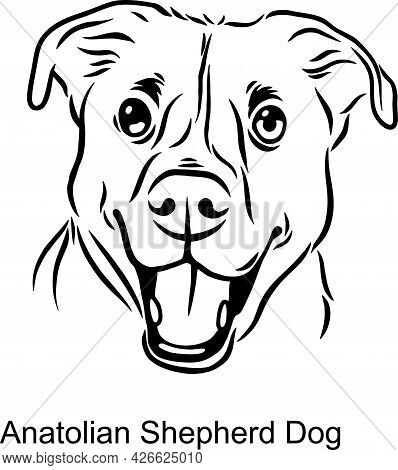 Anatolian Shepherd Dog Portrait Dog In Line Style - Pet Portrait In Light Style Head Isolated On Whi