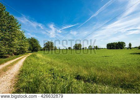 Rural Landscape With A Green Wheat Fields In Springtime, Padan Plain Or Po Valley (pianura Padana, I