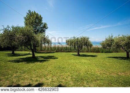 Beautiful Coastline Of The Lake Garda (lago Di Garda) With A Green Meadow And Olive Trees Near The S