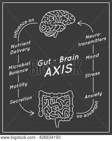 Gut - Brain Axis Vertical Poster. Medical Infographic