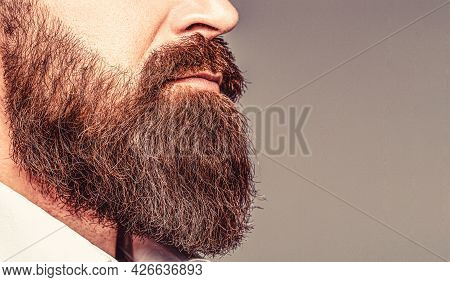 Close Up Of Handsome Beard Hipster Elegant Male. Bearded Man Close Up. Beard Is His Style. Closeup O