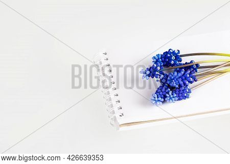 Muscari Hyacinth Blue Flowers Lie On Top Of An Open Notebook On A White Table