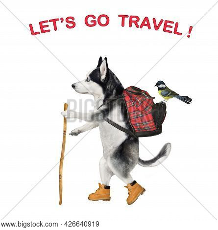 A Dog Husky Tourist In Boots With A Backpack And A Stick Is Hiking. Let's Go Travel. White Backgroun