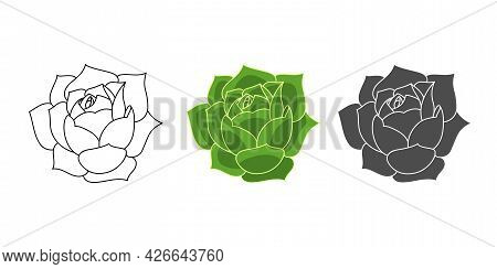Set Succulent Echeveria Greenovia - Color Green, Doodle, Simple. Collection Isolated Element On Whit