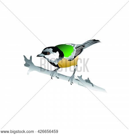 Attractive And Colorful Cute Bird Illustration With An Attractive And Attractive Appearance