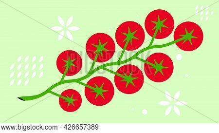 Cherry Tomatoes On Branch. Minimal Style Tomato Composition. Abstract Vegetables On Green Background