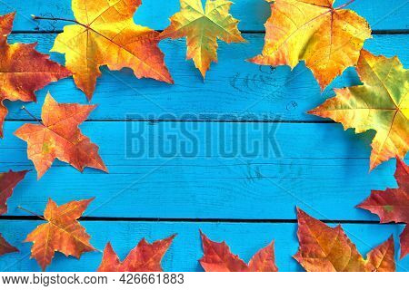 Autumn Background With Colorful Fall Maple Leaves On Blue Rustic Wooden Table With Place For Text. T