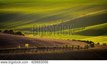 Wavy Agricultural Field Of Moravian Tuscany. Czech Repulbic