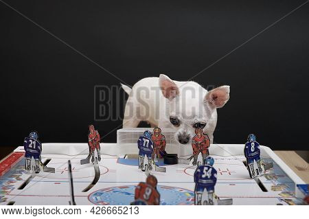 Moscow, Russia. 22-06-2021. A Chihuahua Dog Sits In Front Of A Hockey Board Hockey Game And Looks Do