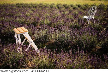 Closeup Shot Of A Chair In A Field Of Lavender