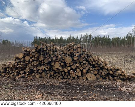 Lumber Harvesting. Large Stack Of Firewood For Winter Heating. Round Firewood In One Pile.