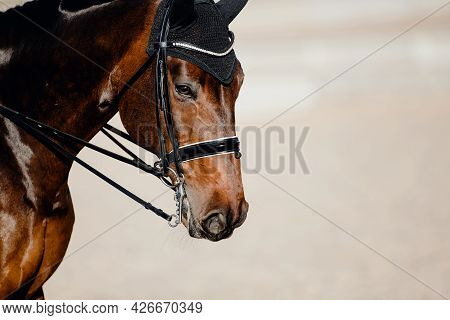 Portrait Sports Brown Stallion In The Double Bridle. Dressage Of Horses. Equestrian Sport. Horseback