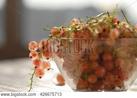 Large Ripe White Currants In A Glass Vase On A Wooden Table, Beautifully Backlit By Sunlight. A Heal