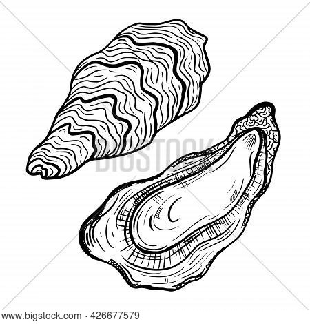 Oysters Vector Icon. Isolated Illustration Of An Open And Closed Oyster. A Seafood Delicacy. Sketch