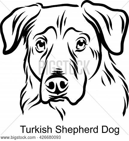 Turkish Shepherd Dog Portrait Dog In Line Style - Pet Portrait In Light Style Head Isolated On White