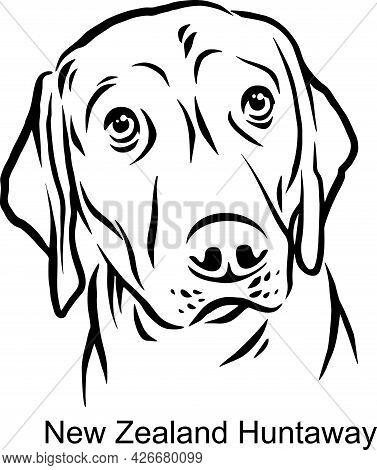 New Zealand Huntaway Portrait Dog In Line Style - Pet Portrait In Light Style Head Isolated On White