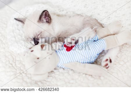Kitten sleeping on white blanket with toy. Cat sleep in clothes