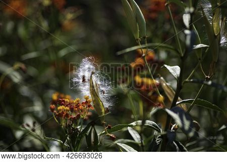 Floral Background. Closeup View Of Flowers. Selective Focus. Blurred Background