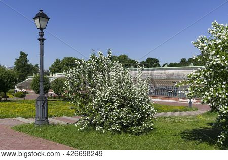 Moscow, Russia - June 20, 2021: Blooming Chubushnik Bushes On The Background Of The Old Building Of